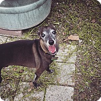 Adopt A Pet :: Dimitri in Austin - Argyle, TX