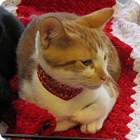 Adopt A Pet :: Carmel - Seminole, FL