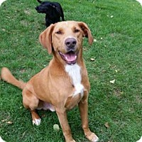 Retriever (Unknown Type) Mix Dog for adoption in Woonsocket, Rhode Island - Lucky