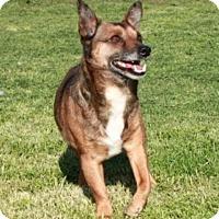 Adopt A Pet :: Tippy Toe - Washington, DC