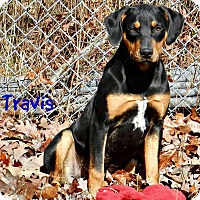 Adopt A Pet :: Travis - Lawrenceburg, TN
