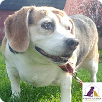 Adopt A Pet :: JoJo - Eighty Four, PA