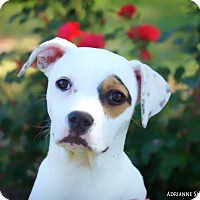 Adopt A Pet :: Honor - Fayetteville, GA
