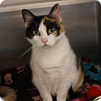 Adopt A Pet :: Jessy - Naperville, IL