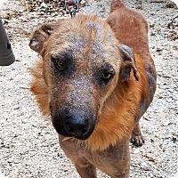 Adopt A Pet :: Lexa - Danbury, CT