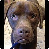 Adopt A Pet :: Rock - Lancaster, OH