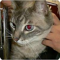 Adopt A Pet :: Spangle - lake elsinore, CA