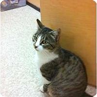 Adopt A Pet :: Bandy - Modesto, CA