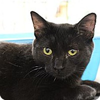 Adopt A Pet :: Sydney - Santa Monica, CA