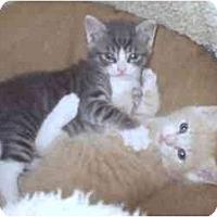 Adopt A Pet :: Spalding & McEnroe - New York, NY
