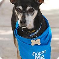 Adopt A Pet :: Sargent - Santa Monica, CA