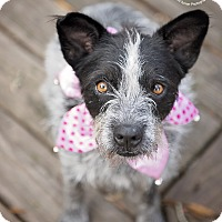 Adopt A Pet :: Simone - Kingwood, TX