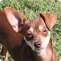 Adopt A Pet :: Monica - Edmonton, AB