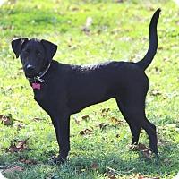 Adopt A Pet :: Millie - Glastonbury, CT