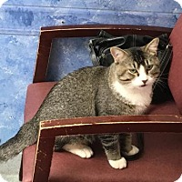 Adopt A Pet :: Zebin - Forest Lake, MN