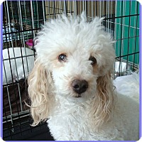 Adopt A Pet :: Mello - Las Vegas, NV