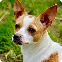 Adopt A Pet :: Libby (WI) - Greenfield, WI