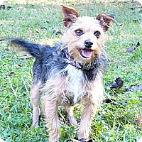 Adopt A Pet :: Honor - Mocksville, NC