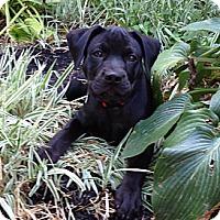 Adopt A Pet :: Baby Mac - Marlton, NJ