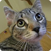 Adopt A Pet :: Umbee - Milwaukee, WI