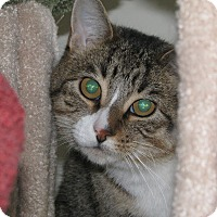 Adopt A Pet :: Lanister - Edmonton, AB