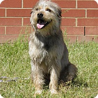 Adopt A Pet :: Rocky - Indian Trail, NC