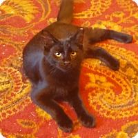 Adopt A Pet :: Fred - Southington, CT