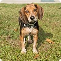 Adopt A Pet :: Felicia - Boston, MA