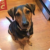 Adopt A Pet :: Miles (COURTESY POST) - Baltimore, MD