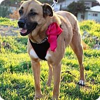Adopt A Pet :: Bibi - Irvine, CA