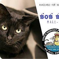 Adopt A Pet :: Bob Bob - Davenport, IA