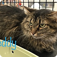 Adopt A Pet :: Teddy  Love me - Sterling Hgts, MI