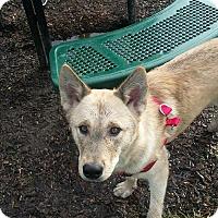 Adopt A Pet :: Kilo - CHESTERFIELD, MI