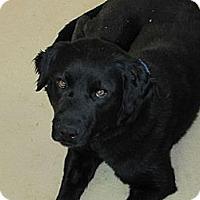 Adopt A Pet :: Jesse - Denver, CO