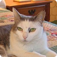 Adopt A Pet :: EVE - 2014 - Hamilton, NJ