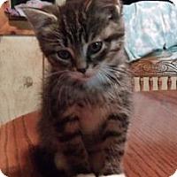 Adopt A Pet :: Luke - Acme, PA