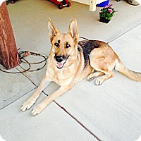 Adopt A Pet :: Ginger - Victorville, CA
