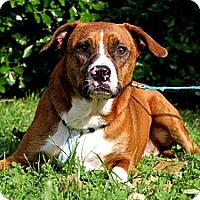 Adopt A Pet :: Twyla - nashville, TN