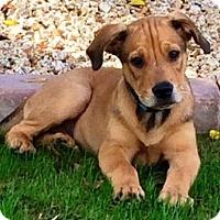 Adopt A Pet :: Meyer - Gilbert, AZ