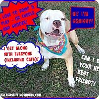 Adopt A Pet :: Squishy - Orlando, FL