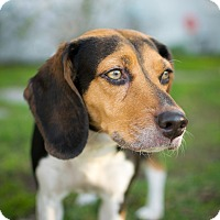 Adopt A Pet :: Noni - Canoga Park, CA