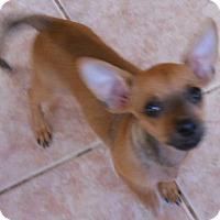 Adopt A Pet :: Pickles - dewey, AZ