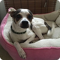 Adopt A Pet :: Flaco - Burbank, CA