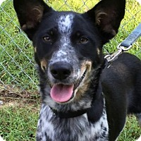 Adopt A Pet :: Dorie - Brattleboro, VT