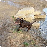 Adopt A Pet :: Yukon - Denton, TX