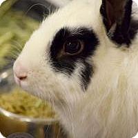 Adopt A Pet :: Max - Salt Lake City, UT