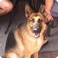 Adopt A Pet :: Referral - Raz - Denver, CO