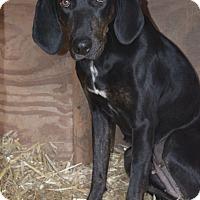 Adopt A Pet :: Josie - Greensburg, PA