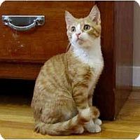 Adopt A Pet :: Randy - Colmar, PA