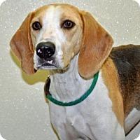 Adopt A Pet :: Earl - Port Washington, NY